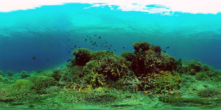 Tropical fishes and coral reef underwater. Hard and soft corals, underwater landscape. Travel vacation concept. Philippines. Virtual Reality 360.