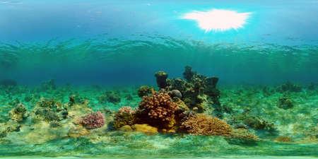Underwater scene coral reef. Hard and soft corals, underwater landscape. Travel vacation concept. Philippines. Virtual Reality 360. Stok Fotoğraf