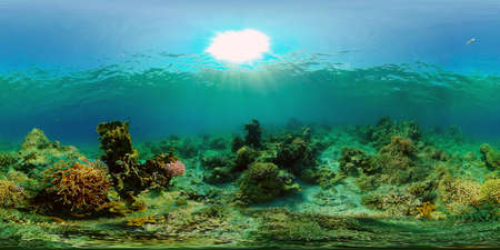 Tropical fishes and coral reef at diving. Underwater world with corals and tropical fishes. Virtual Reality 360. Stok Fotoğraf