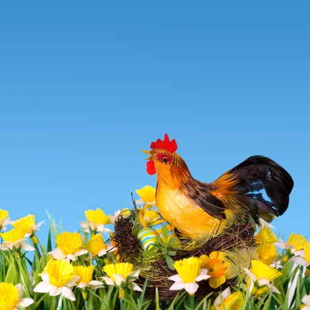 easter hen in the nest on the meadow photo