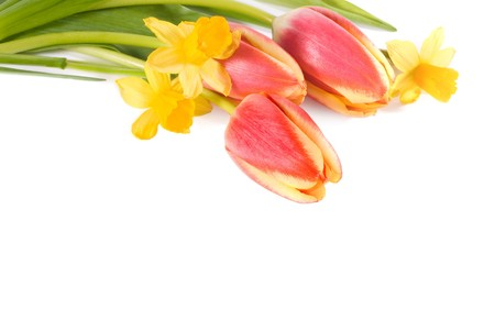 easter lily: spring flowers