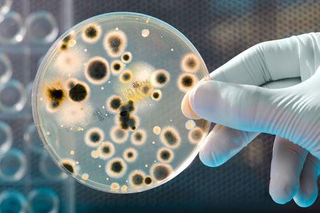 microbiologia: Placa de Petri con las bacterias en una parte de cient�ficos Foto de archivo