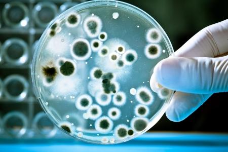 bacterie: Gloved hand houden een petrischaal Stockfoto