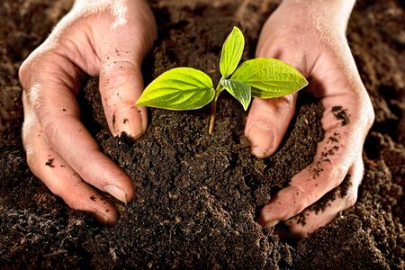 soil: Farmer mani detiene una giovane pianta fresca