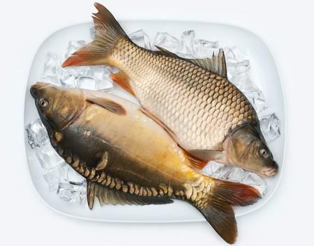 freshly carp on ice