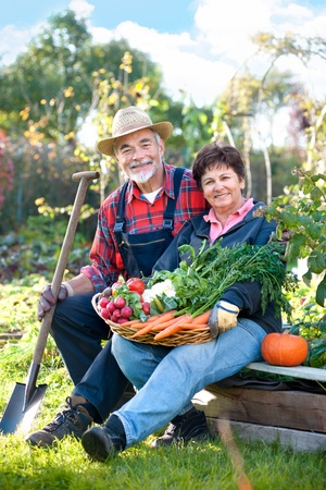 woman gardening:  Senior couple with a basket of harvested vegetables Stock Photo