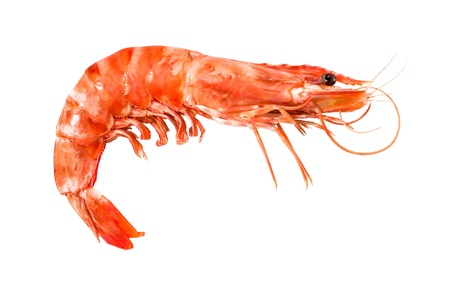 shrimp: tiger shrimp isolated on white