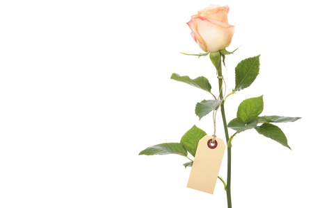 long stem roses: single rose with a blank label Stock Photo