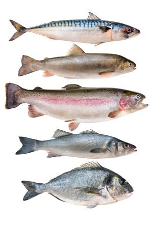 trucha: colección de peces aislados en el fondo blanco