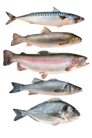 trout fishing: fish collection isolated on the white background Stock Photo