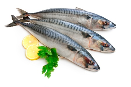 Mackerel Fish (Scomber scrombrus) over white background