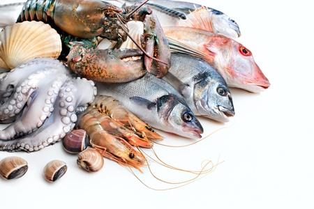 seabass: Pescado fresco de los peces y otros mariscos Foto de archivo