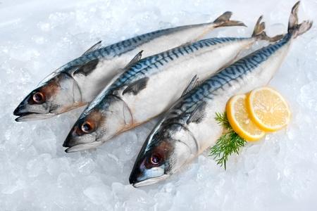 De pescado caballa fresca (Scomber scrombrus) en el hielo