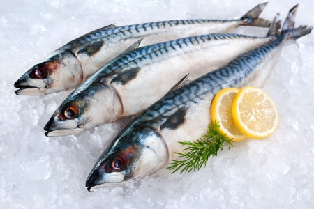 fish scale: Fresh mackerel fish  Scomber scrombrus  on ice