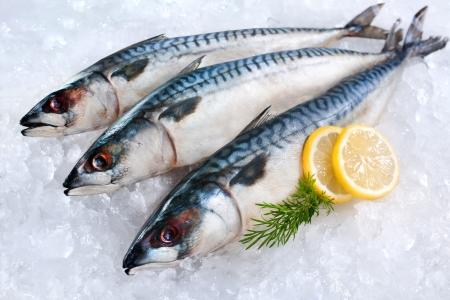 fisch eis: Frische Makrelen Fisch Scomber scrombrus auf Eis Lizenzfreie Bilder