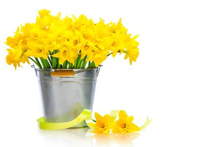daffodils in a metal bucket over white background photo