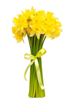 daffodil: bouquet of beautiful daffodils isolated on white background