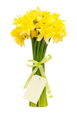narcissus: bouquet of beautiful daffodils isolated on white background