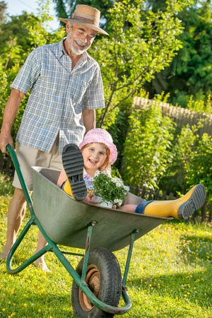 barrow: Grandfather giving granddaughter ride in wheelbarrow in the garden