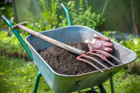 agricultural tools: Pitch fork and gardening gloves in wheelbarrow full of humus soil