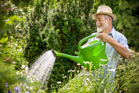 cultivate: Senior man watering the flowers in  the garden