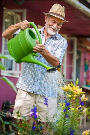 yard work: Senior man watering the flowers in  the garden