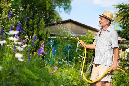 maintaining: Senior man watering the garden with hose