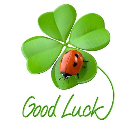 buena suerte: Símbolos de suerte: el trébol de cuatro hojas y la mariquita