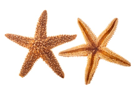 coral ocean: Sea star isolated on white background Stock Photo