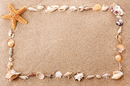 Full frame of seashells on sandy beach photo
