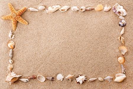 shell pattern: Full frame of seashells on sandy beach