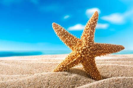 모래 해변 휴가 개념에 아름다운 fishstar
