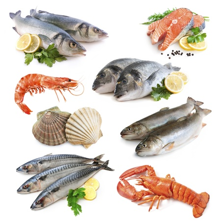 shell fish: fish collection isolated on the white background Stock Photo