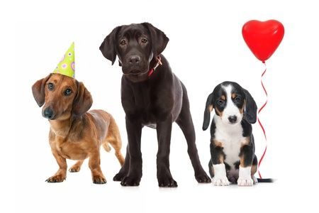 heart balloon: three puppies celebrating a birthday on white background
