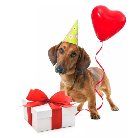 dachshund: Party dog with party hat,  gift boxes and balloons. Isolated on white background