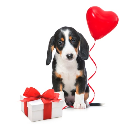 Party dog with gift boxes and balloons. Isolated on white background photo