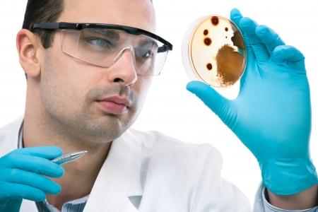 bacterias: Cient�fico observaci�n petri plato en el laboratorio