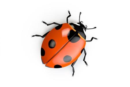 ladybug cartoon: 3D ladybug isolated on the white background
