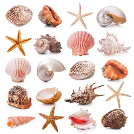 caracol: Colección del Seashell aislado en el fondo blanco Foto de archivo