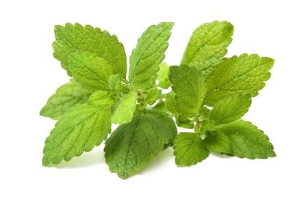 Lemon balm Fresh green leaf of melissa over white