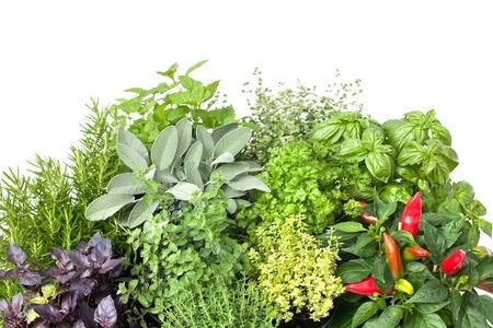 aromatický: Čerstvé kuchyňské bylinky izolovaných na bílém pozadí Reklamní fotografie