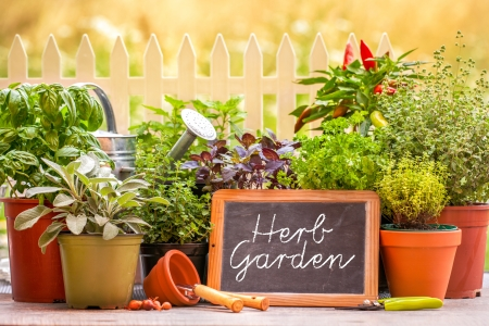 Herb garden at home yard in with pots of herbs in front of fence photo