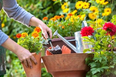 jardineros: Jardineros mano de plantar flores en maceta con suciedad o el suelo