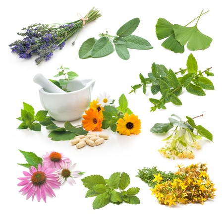Collection of fresh medicinal herb on white background photo