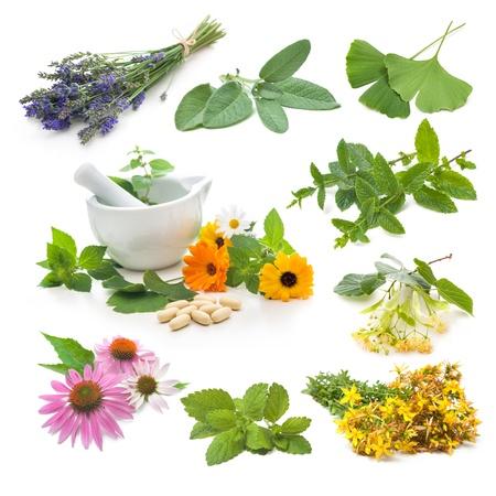 Inzameling van verse geneeskrachtige kruiden op een witte achtergrond Stockfoto