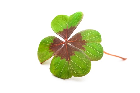 Four leaf clover on a white background