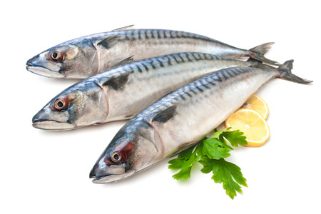 dill and parsley: Mackerel Fish (Scomber scrombrus) over white background Stock Photo