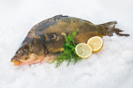 Fresh common carp fish with lemon on ice photo