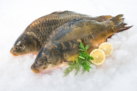 Fresh common carp fish with lemon on ice Reklamní fotografie