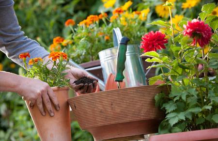 Gärtner pflanzen Blumen Hand im Topf mit Schmutz oder Boden Standard-Bild